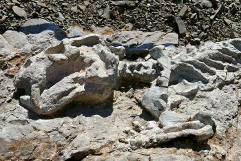 Diictodon skeleton, Fossil Trail, Karoo National Park,  Beaufort West, Karoo