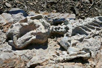 Diictodon skeleton, Fossil Trail, Karoo National Park, Beaufort West, Karoo